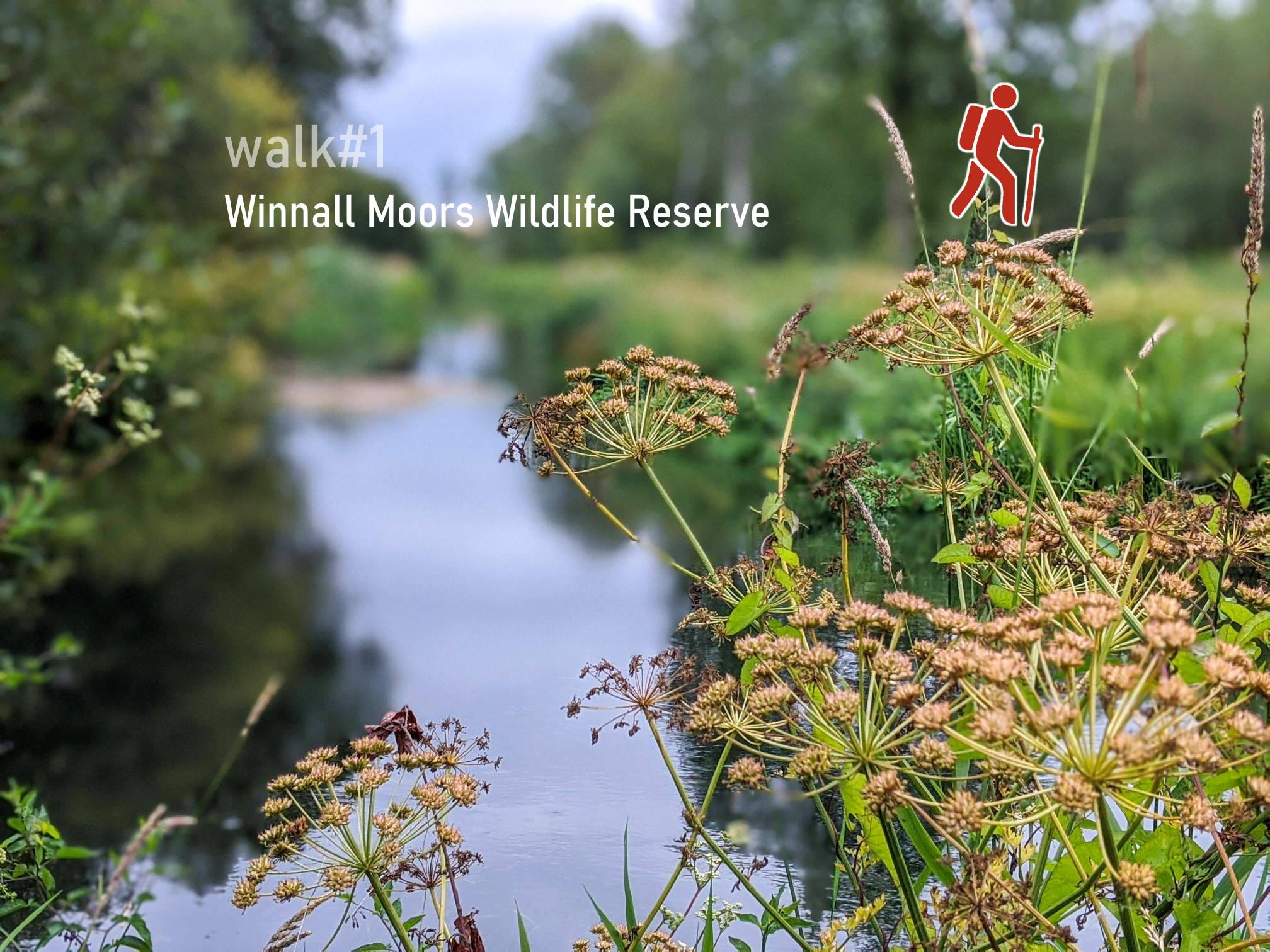Winnall Moors Wildlife Reserve