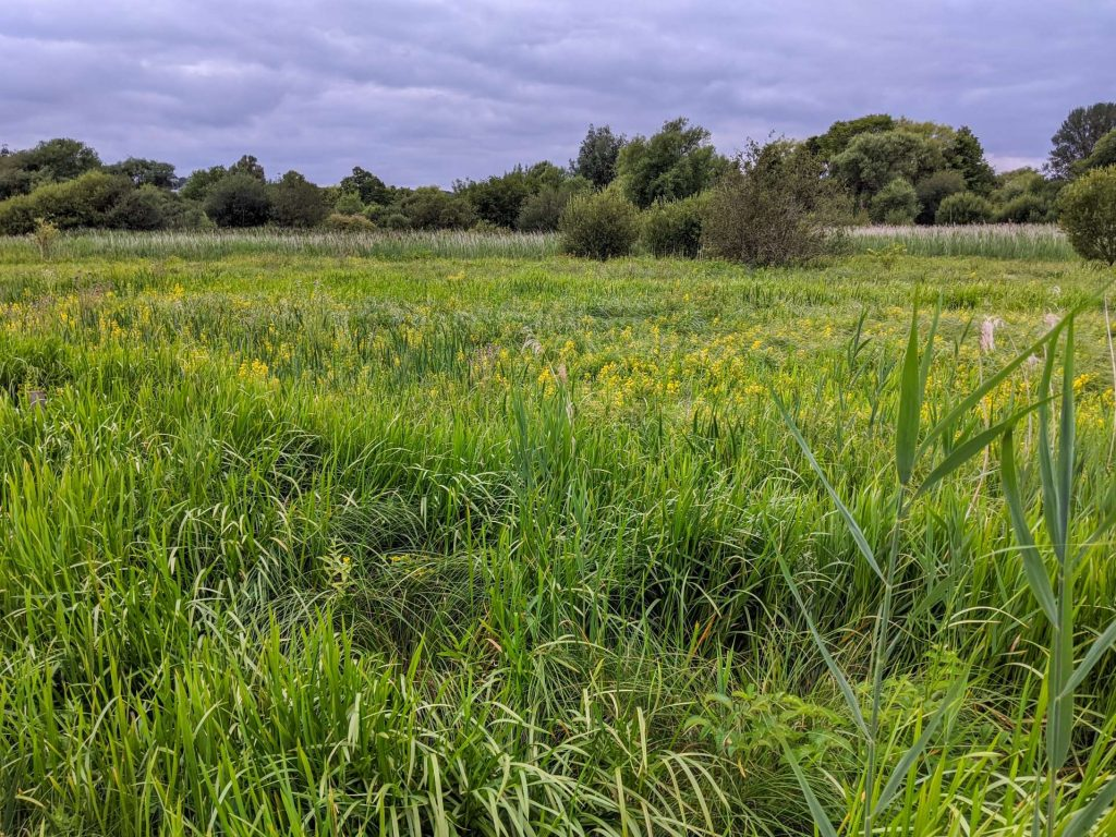 View towards the reeds in the centre of the Reserve