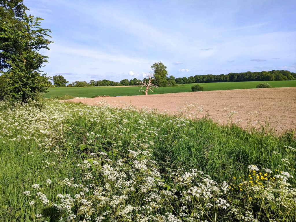Field on Itchen Way