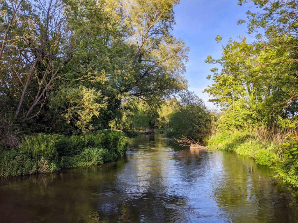 River Itchen near Chilland Lane (westwards)
