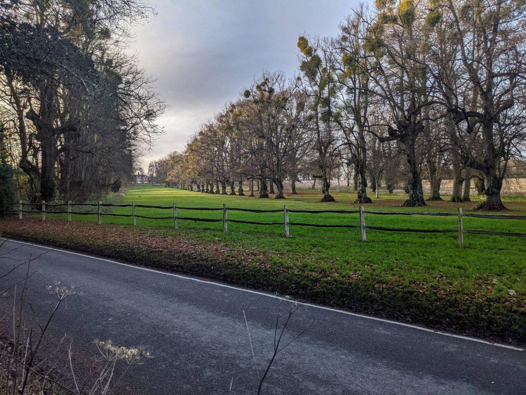Trees flanking Lainston Avenue towards Lainston House