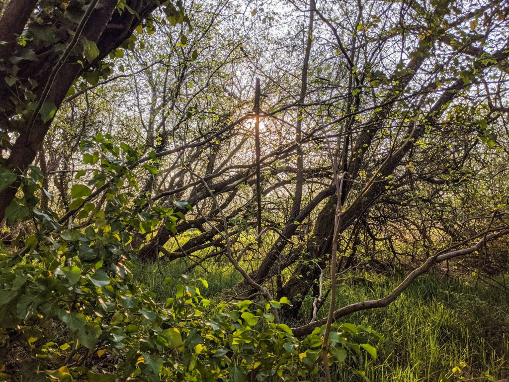 Thicket, by the A34