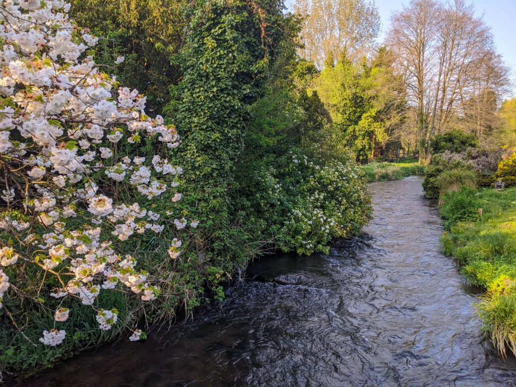 Spring blossoms at Fulling Mill II