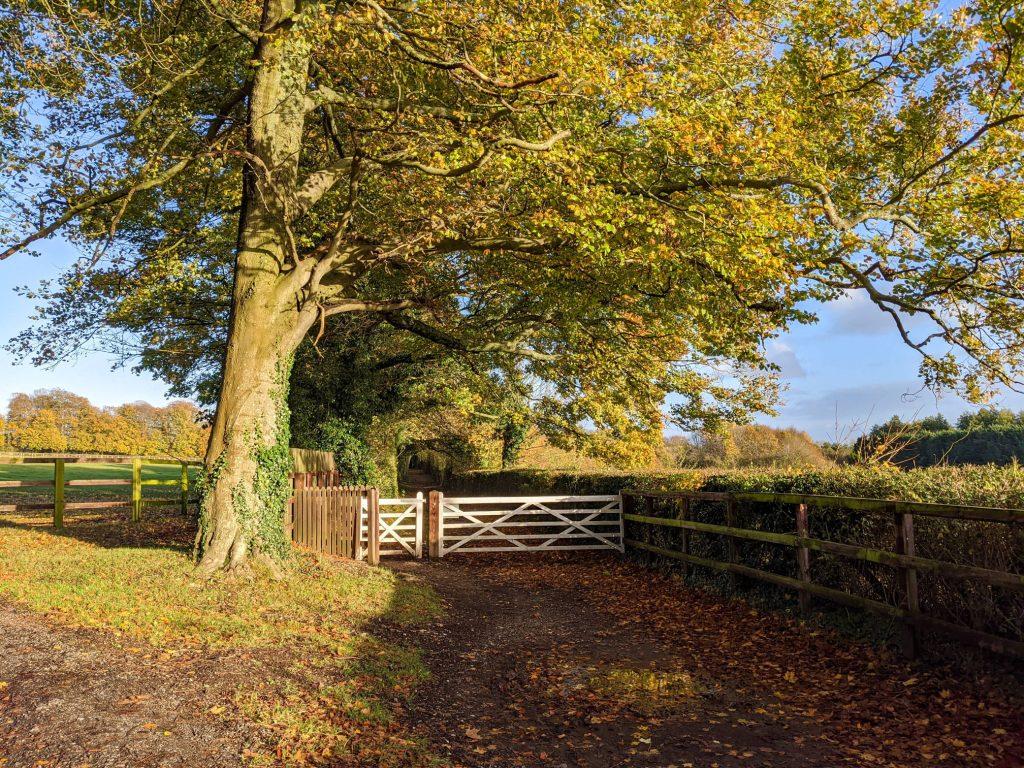 gate underneath tree in autumn sun