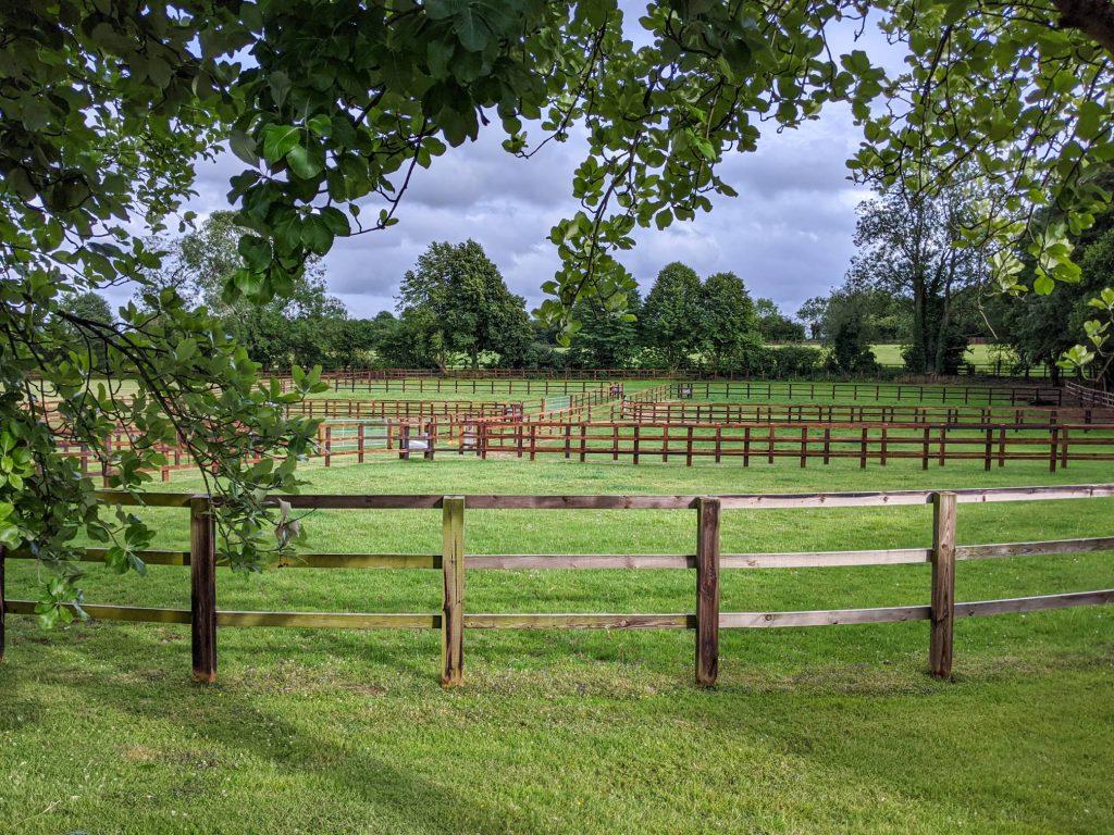 paddocks without horses at Littleton Stud