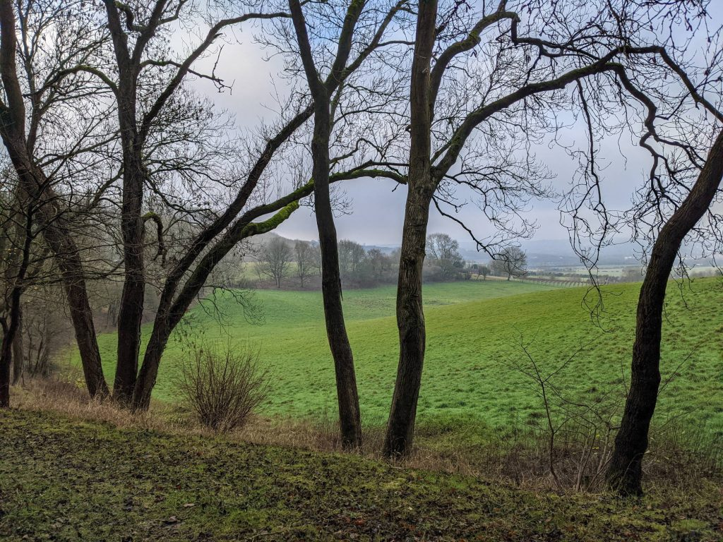 trees in front of the hilly meadows