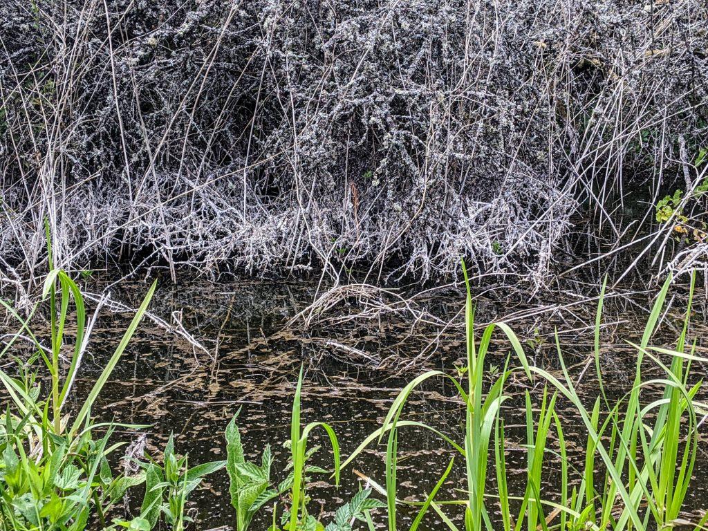 grass and brambles