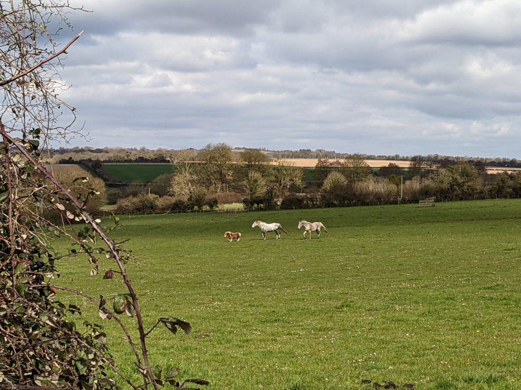 Horses near King's Somborne