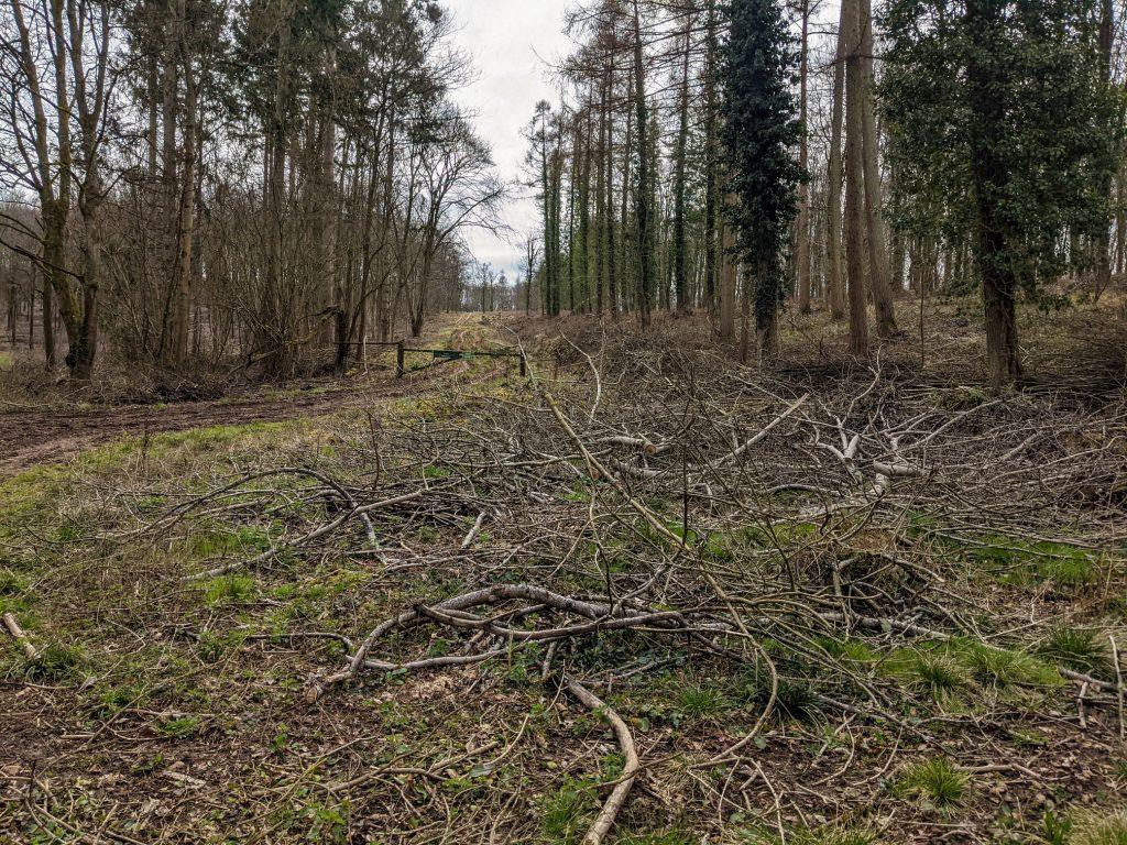 Parnholt Wood