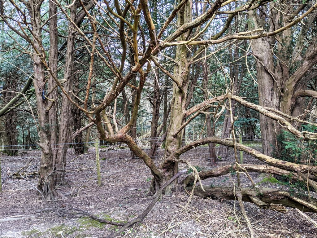 Woods by Farley Mount