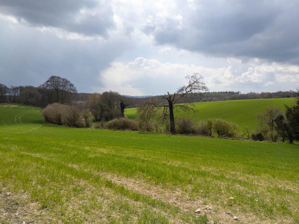 Field on the return to West Winterslow