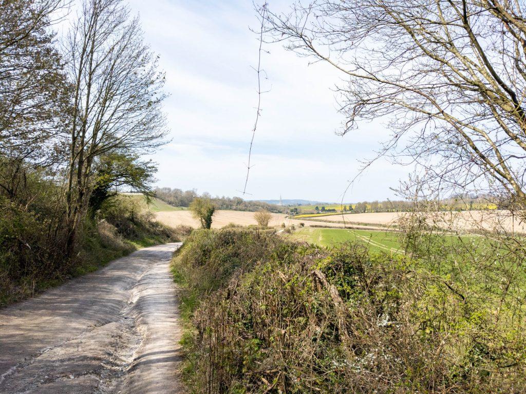 Fields on the way down to Salisbury